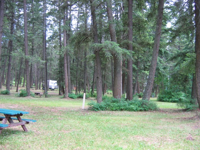 Pinegrove Campground Treed Sites